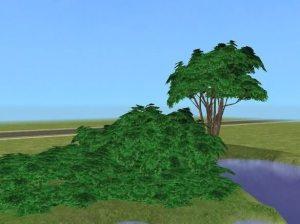 SironaSimscorvi_extra_large_bushes