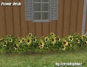 SironaSimscorvi_flower_shrub